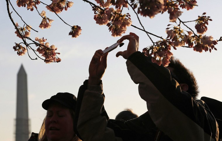 April 7, 2013: People use their mobile phones to photograph cherry blossoms along the Tidal Basin in Washington. (Jonathan Ernst/Reuters)