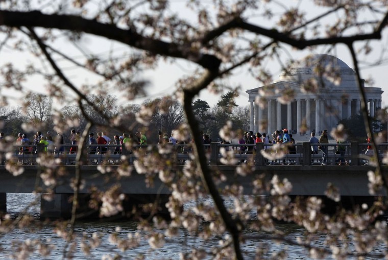 April 7, 2013: Runners cross a bridge near the Thomas Jefferson Memorial during the annual Cherry Blossom Ten Mile Run at the Tidal Basin in Washington. (Jonathan Ernst/Reuters)