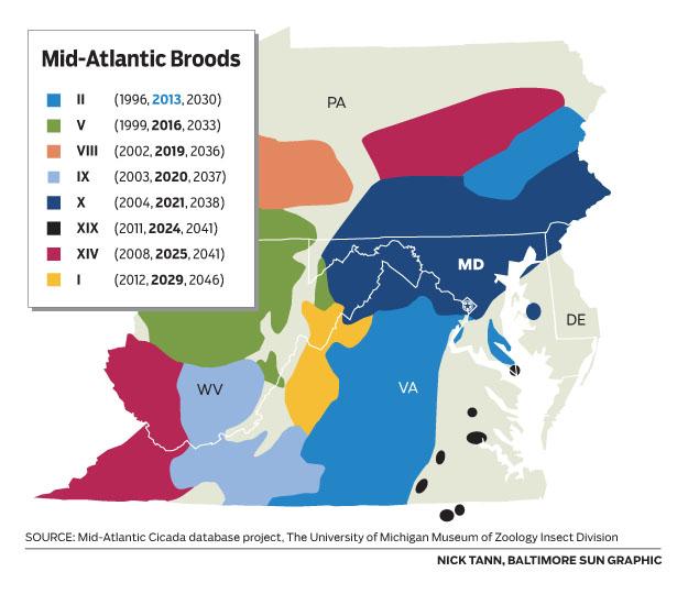 Cicada Brood Map