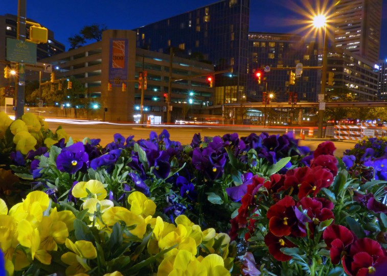 Pansies welcome visitors to the inner harbor on Light Street at the end of Conway Street for springtime greenery in the Baltimore area Wednesday, Apr. 24, 2013. (Karl Merton Ferron/Baltimore Sun Staff)