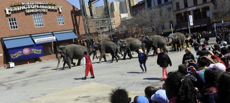 "Five elephants walk into the parking lot at the 30th annual ""elephant brunch"" outside Lexington Market. (Barbara Haddock Taylor/Baltimore Sun)"