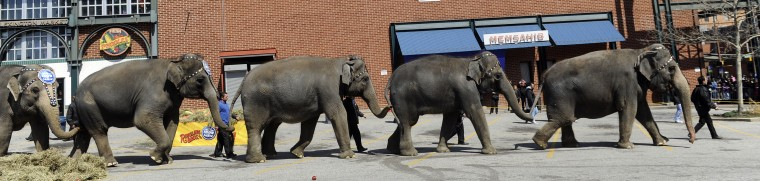 "Five elephants leave the parking lot after the 30th annual ""elephant brunch"" outside Lexington Market. (Barbara Haddock Taylor/Baltimore Sun)"
