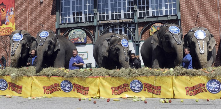 "Elephants eat at the 30th annual ""elephant brunch"" outside Lexington Market. (Barbara Haddock Taylor/Baltimore Sun)"