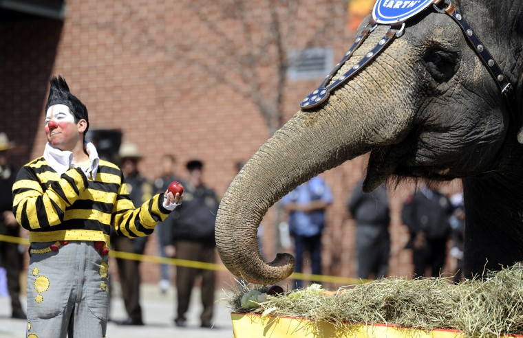 "One of the Barnum and Bailey clowns offers an apple to an elephant at the 30th annual ""elephant brunch"" outside Lexington Market. (Barbara Haddock Taylor/Baltimore Sun)"