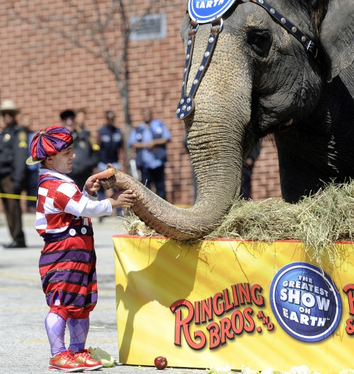 "One of the Barnum and Bailey clowns offers a carrot to an elephant at the 30th annual ""elephant brunch"" outside Lexington Market. (Barbara Haddock Taylor/Baltimore Sun)"