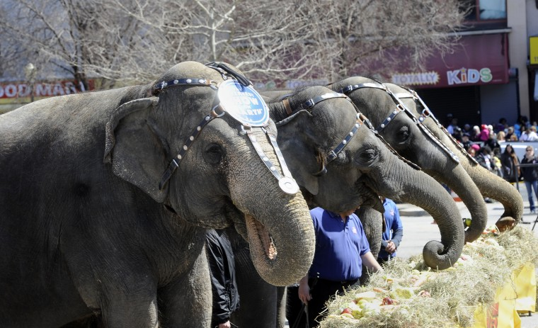 "Circus elephants eat at the 30th annual ""elephant brunch"" outside Lexington Market. (Barbara Haddock Taylor/Baltimore Sun)"