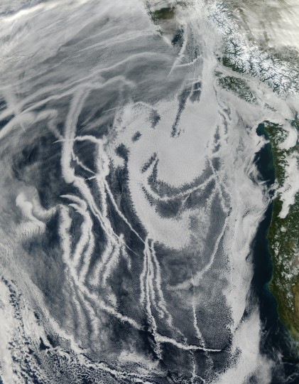 Amidst the natural marine clouds southwest of Vancouver Island were long, thin, man made clouds, many of them arising from small source points. The thin clouds were ship tracks - clouds seeded by particles in ship exhaust. Tiny airborne particles (aerosols) act as nuclei or seeds for cloud formation, as water vapor condenses onto them. NASA image