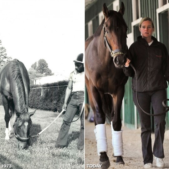 DERBY WINNERS: LEFT - Derby winning Secretariat enjoys grass and clover at Pimlico race track following a brief workout with exercise boy George Davis. (Baltimore Sun) *** RIGHT - Derby winning horse Orb arrived at Pimlico May 13, 2013, being led by assistant trainer and exercise ride Jennifer Patterson. (Gene Sweeney Jr./Baltimore Sun)