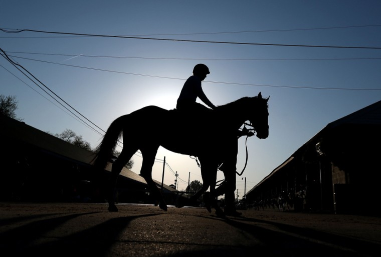 A horse walks thru the barn area during the morning training for the 2013 Kentucky Derby at Churchill Downs in Louisville, Kentucky. (Andy Lyons/Getty Images)