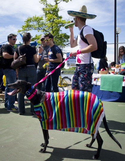 """A dog owner walks his dressed up dog during the """"Run of the Chihuahuas"""" annual race in Washington. (Mladen Antonov/AFP/Getty Images)"""