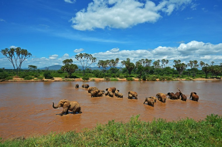 Elephants are pictured crossing the Ewaso Nyiro river in Samburu game reserve. UNEP goodwill ambassador and Chinese actress Li Bingbing was on an official visit in Kenya to highlight issues of Africa's poaching crisis. (Carl de Souza/Getty Images)