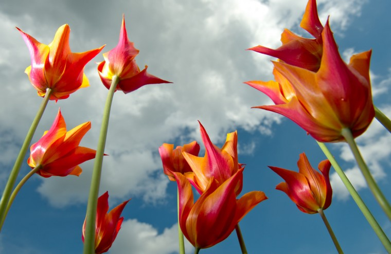Tulips bloom at the Botanical Garden in Hamburg, northern Germany. (Sven Hoppe/Getty Images)