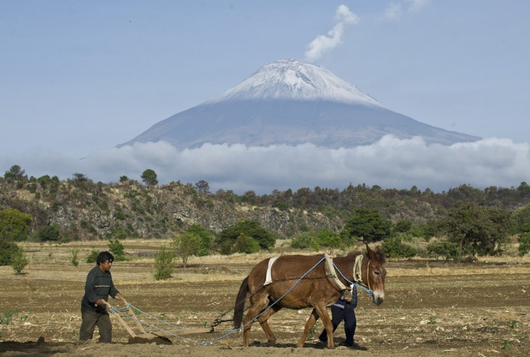 """Backdropped by Popocatepetl Volcano, Mexico's second highest peak just 55 km southeast of Mexico City, a farmer plows the land in San Nicolas de los Ranchos, in the state of Puebla. The National Disaster Prevention Centre (CENAPRED) raised the alert level on Sunday to """"yellow phase three"""" as the Popocatepetl continues to spew ash and smoke. (Ronaldo Schemidt/Getty Images)"""