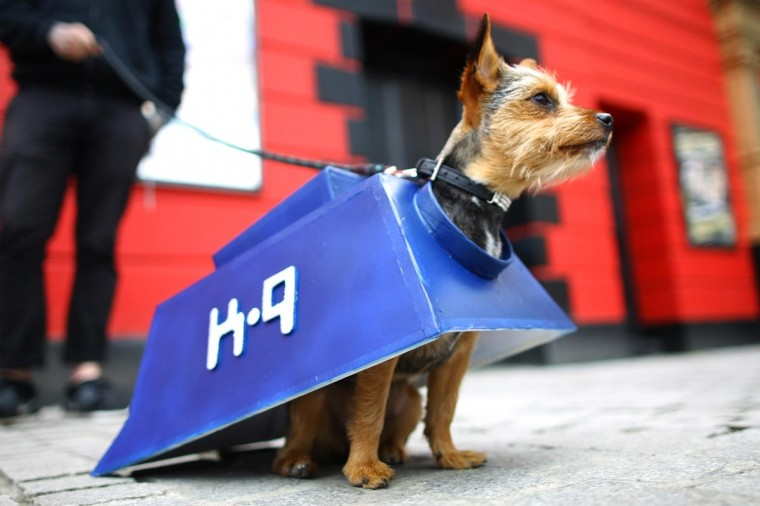 Missy, a Chorkie is dressed up as the character K-9 from the film and TV series Doctor Who on May 5, 2013 in London, England. Enthusiasts gathered at the Picture House in Stratford to parade their dogs dressed up as famous Sci-Fi characters as part a London-wide event called Sci-Fi London. (Jordan Mansfield/Getty Images)