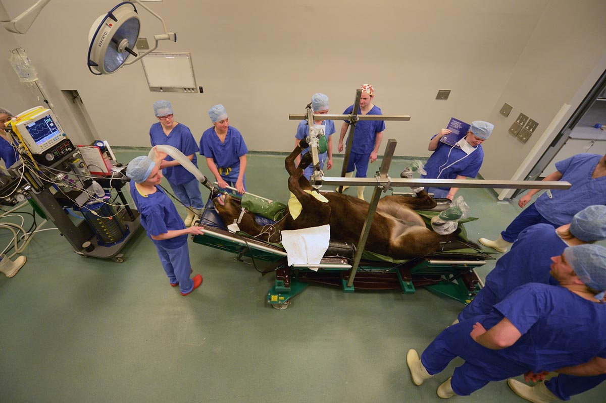 Veterinary Medicine glasgow universities and colleges list