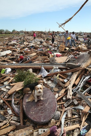 Two dogs sit on a table surrounded by rubble while residents search for valuables after a powerful tornado ripped through the area on May 21, 2013 in Moore, Oklahoma. The town reported a tornado of at least EF4 strength and two miles wide that touched down yesterday killing at least 24 people and leveling everything in its path. U.S. President Barack Obama promised federal aid to supplement state and local recovery efforts. (Scott Olson/Getty Images)
