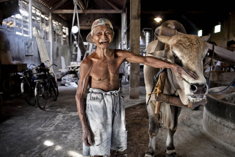Kesdi Wiyono, 65, who has worked for 20 years at a mie lethek factory, stands next to a cow at the factory in Srandakan village, Bantul on May 22, 2013 in Yogyakarta, Indonesia. Yasir Feri Ismatrada took on the family business of mie lethek production founded by his late grandfather. A one-ton stone cylinder is rotated by cows in order to grind the flour, a technique rarely seen today. Yasir puts great importance on the fair treatment of his 40 employees with management profits capped at 10%, prioritizing the interests of the staff. Mie lethek are sold for Rp 8,000 or US$80 cents per kilogram. (Ulet Ifansasti/Getty Images)