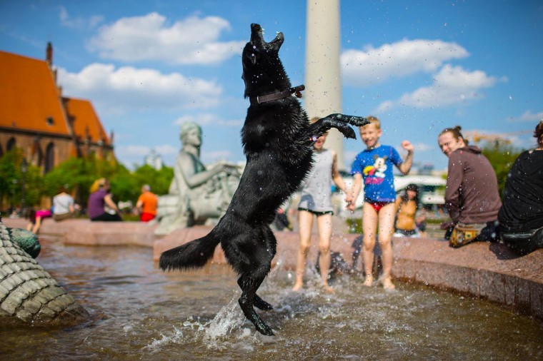 A dog jumps in a well in Berlin, on May 5, 2013. Meteorologists forecast temperatures around 25 degrees for the coming week in Germany. (Hannibal Hanschke/AFP/Getty Images)