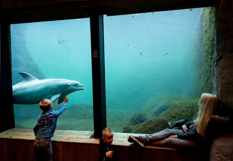 Children look at a dolphin in an aquarium at the Dolfinarium, in Harderwijk, The Netherlands, on May 20, 2013 during the second day of Pentecost. The sea animal park is been renovated recently and opened it doors for this season. (Robin Van Lonkhuijsen/AFP/Getty Images)