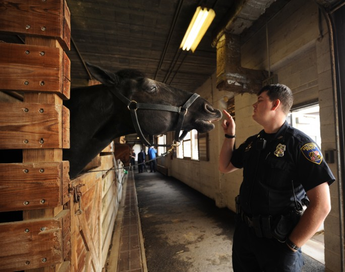 """Officer Corey Valis tells """"Slurpee,"""" a horse donated by 7-Eleven, to stop kicking the stall. (Algerina Perna/Baltimore Sun)"""