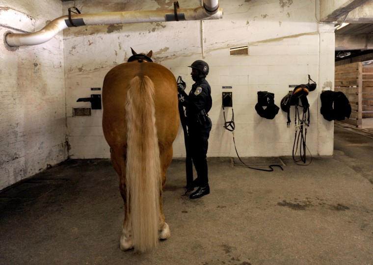 Officer Arturo Garvin removes the tack from his horse, Buster. (Algerina Perna/Baltimore Sun)
