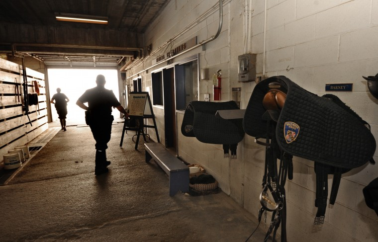 This year is the 125th anniversary of the Baltimore Mounted Police. In its heyday in the 1980's, there were 24 officers and horses. At its lowest point about four years ago due to retirement and transfers, there were only 4 horses. Today, nine people and 8 horses make up the mounted police unit. Seven are Baltimore City Police officers; two are hostlers who maintain the stables and horses. (Algerina Perna/Baltimore Sun)