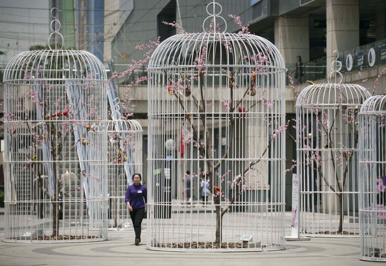 A woman walks past an installation of giant bird cages on a square in Nanjing, Jiangsu province. Six giant bird cages containing artificial trees and birds were installed by the shopping mall which owns the square to promote environmental friendly concepts to the public, according to local media. (Reuters)