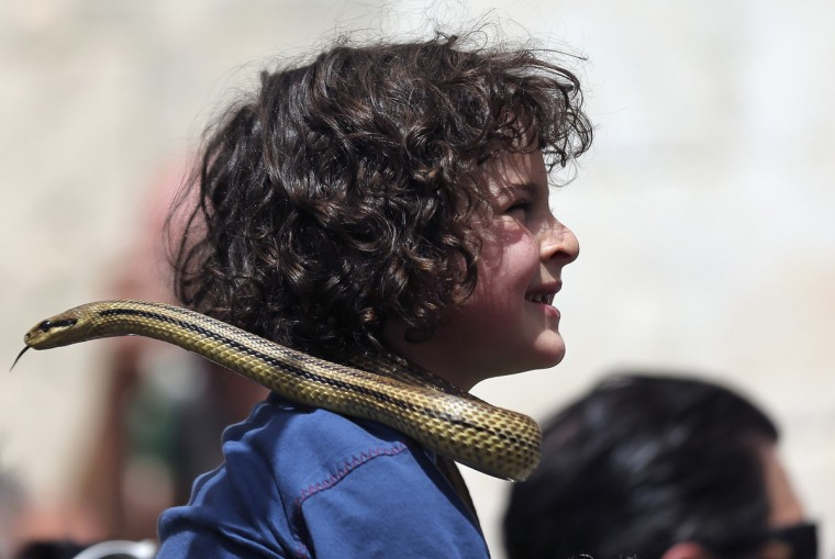 A boy looks on with a snake on his shoulder during the procession of the statue of St. Domenico in Cocullo, central Italy. Every year in May, snakes are placed onto the statue of St. Domenico, which is then carried in a procession around the town. St. Domenico is believed to be the patron saint for people who have been bitten by snakes. (Alessandro Bianchi/Reuters)