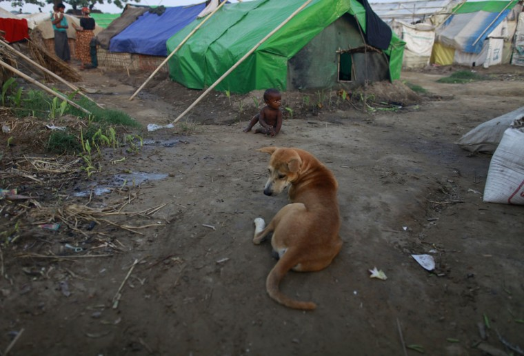 A boy sits near a dog in after returning to a Rohingya internally displaced persons (IDP) camp from a shelter from cyclone Mahasen, outside of Sittwe, Myanmar. (Soe Zeya Tun/Reuters)
