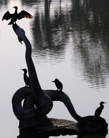 Birds stand on a sculpture of a snake at the Quinta da Boa Vista park, where Pope Francis is expected to lead a gathering on July 26 during his upcoming visit, in Rio de Janeiro. (Sergio Moraes/Reuters photo)
