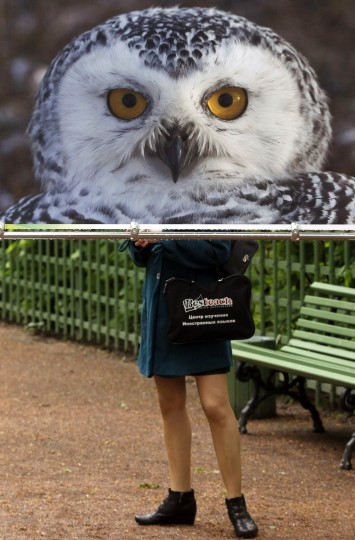A visitor stands behind an illustration of a Polar owl, part of an exhibition at the Summer Garden, in St. Petersburg, Russia. The annual street photo-exhibition, which consists of 60 photos displaying animals and birds listed in the Red Book of Russia, was organized to match the International Day for Biological Diversity introduced by the United Nations General Assembly. (Alexander Demianchuk/Reuters photo