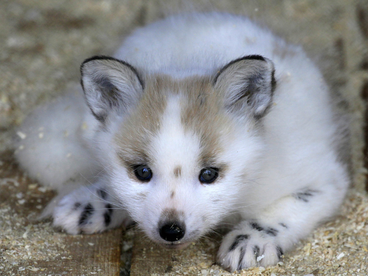 28 Of The Cutest Baby Animals - photo#32