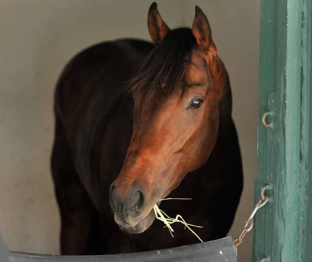 Kentucky Derby winner Orb was assigned stall number 40, which housed all three Triple Crown winners of the 1970s during their trips to Baltimore. (Gene Sweeney Jr./Baltimore Sun Photo)