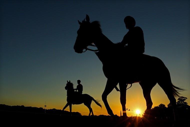 Horses head out to the track to train at Belmont Park in Elmont, New York. (Al Bello/Getty Images)