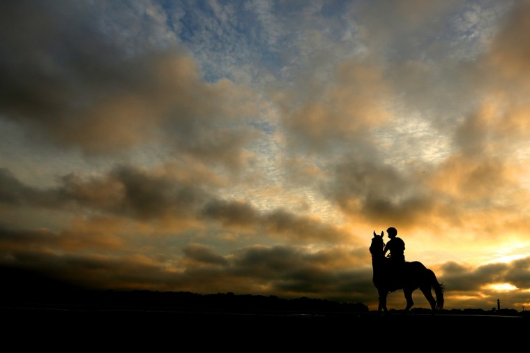 A general view of a horse entering the track for a training session at Belmont Park in Elmont, New York. The Belmont race will be held this Saturday at the track. (Al Bello/Getty Images)