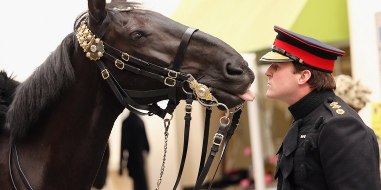 Captain George Ashby of the Household Cavalry plays with his horse 'Cornet' on Motcomb Street as he helps launch the street's annual party in London, England. Proceeds from the street party in Belgravia, featuring entertainment alongside food and drink stalls, is donated to the Household Cavalry fund and the Chelsea Community Hospital Schools. (Oli Scarff/Getty Images)