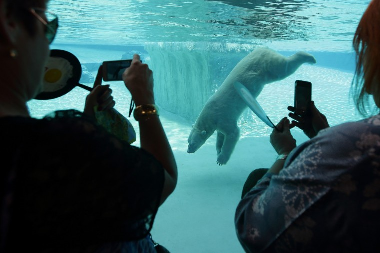 People take photos of the polar bear, 'Inuka' in the frozen tundra enclosure at the Singapore Zoo in Singapore. (Suhaimi Abdullah/Getty Images)