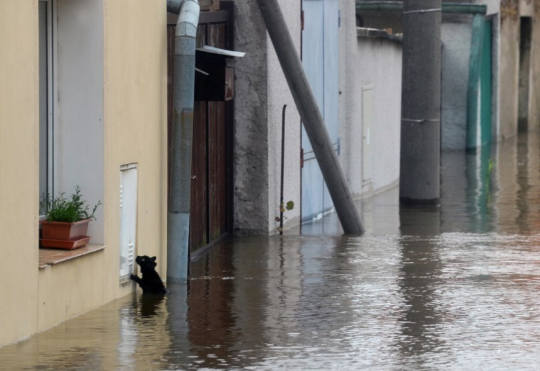 A cat tries to escape from water by the river Vltava in Kly, near Melnik, Czech Republic, on June 4, 2013. Torrential rain and heavy flooding hit central Europe. (Michal Cizek/Getty Images)