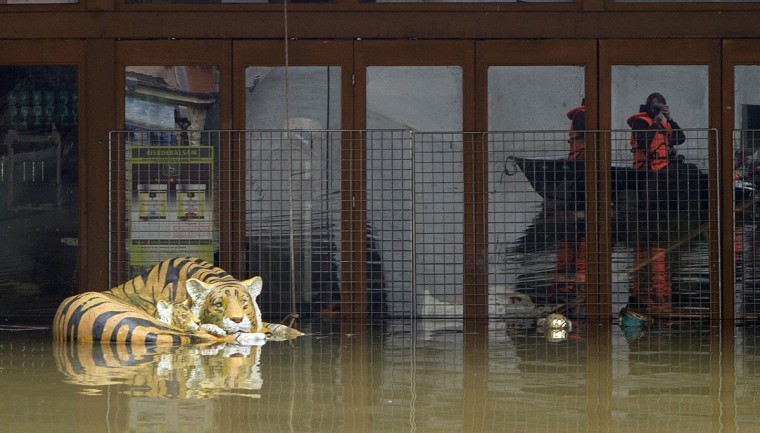 A photographer take pictures of a plastic tiger below submerged in flood water on June 05, 2013 in Hrensko, northern Bohemia. German, Czech and Austrian river cities braced for rising flood waters, evacuating thousands and boosting defences along the swollen Elbe and Danube, after inundations from heavy rains left 11 people dead. (Michal Cizek/Getty Images)