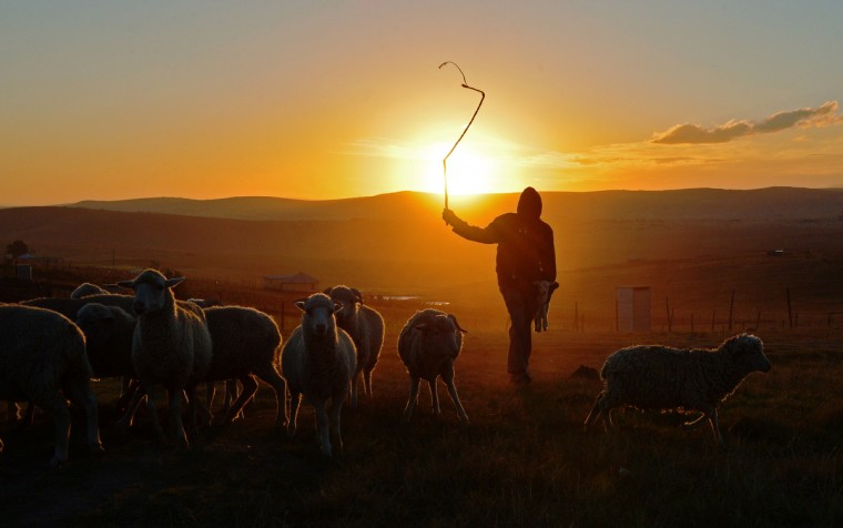 """A shepherd boy is silhouetted, in Qunu a rural village where former South African President Nelson Mandela grew up. Mandela's close family members gathered to hear a sombre prayer wishing the anti-apartheid icon a """"peaceful, perfect, end"""" as he lay in hospital in critical condition with his life seemingly slipping away. (Carl De Souza/Getty Images)"""