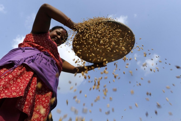 A Nepalese farmer winnows wheat after harvesting at Bhaktapur, on the outskirts of Kathmandu on June 3, 2013. Over 80 percent of Nepal's 27 million population depends upon agriculture and paddy is the major crop in the Himalayan nation. (Prakash Mathema/AFP/Getty Images)
