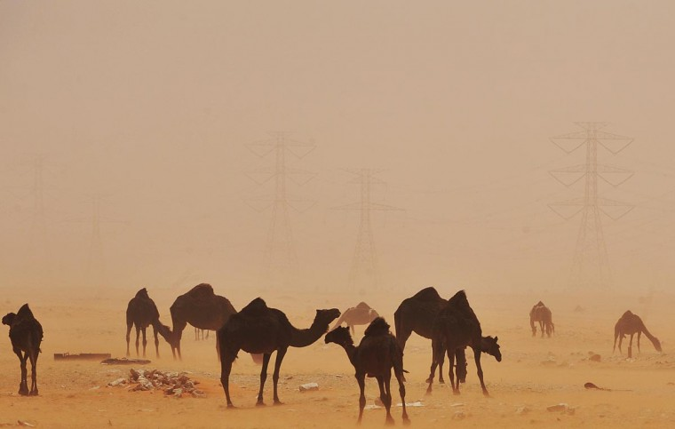 A sand storm envelops camels in the desert region of al-Hasa, some 370 km east of the Saudi capital Riyadh, on June 16, 2013. (Fayez Nureldine/AFP/Getty Images)