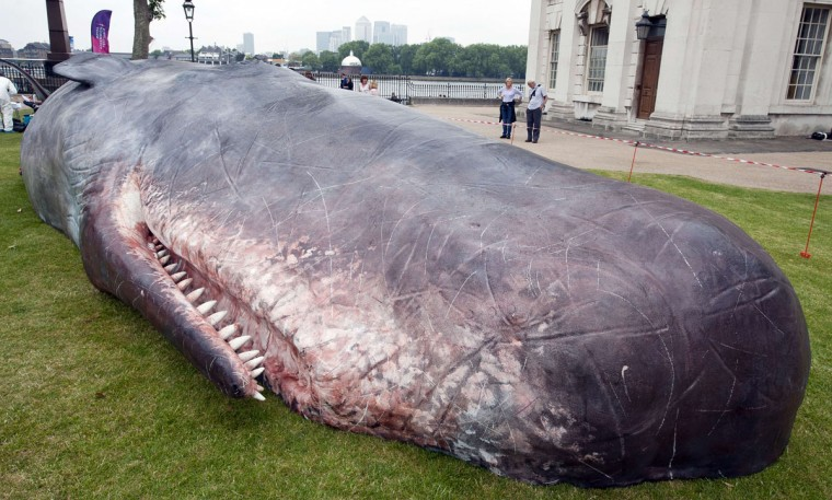 A beached whale art installation by 'Captain Boomer' a collective of Belgian artists lies on the lawns at the Old Royal Naval College in Greenwich, southeast London. The 17 metre long fibreglass whale aims to draw attention to London's whaling history and the increasing number of whales and dolphins spotted around the UK coastline. (Will Oliver/AFP/Getty Images)