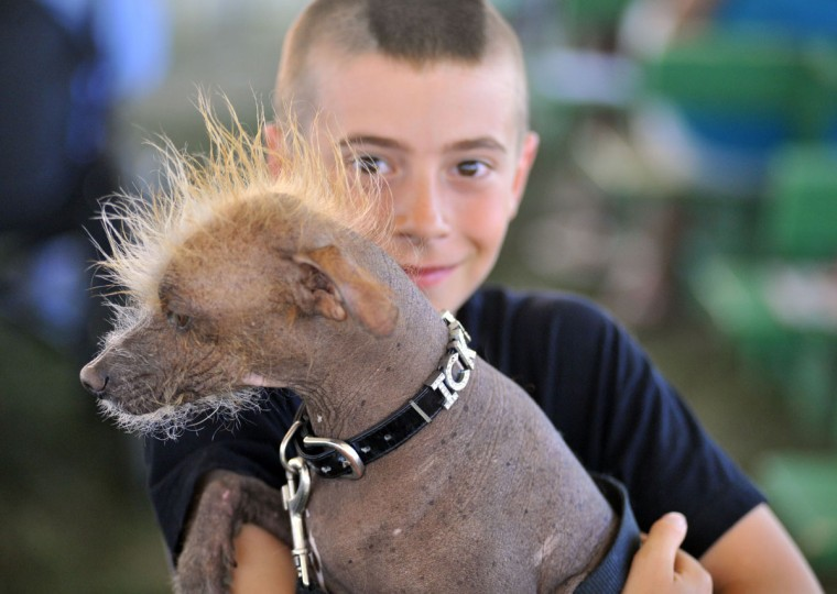 A boy poses with his dog Icky, a Chinese crested, before the World's Ugliest Dog competition in Petaluma, Calif., on Friday, June 21, 2013. (Josh Edelson/AFP/Getty Images)