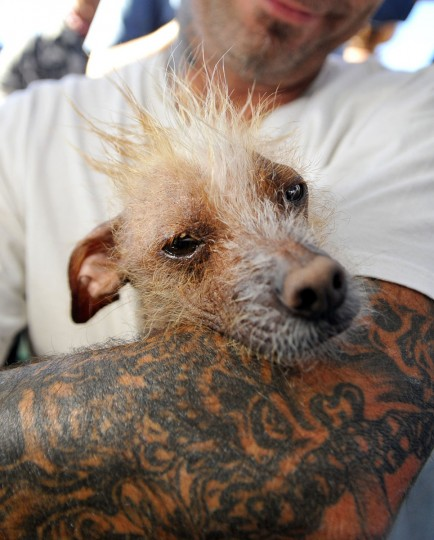 Jon Adler poses with Icky, a Chinese crested, before the World's Ugliest Dog competition in Petaluma, Calif., on Friday, June 21, 2013. (Josh Edelson/AFP/Getty Images)