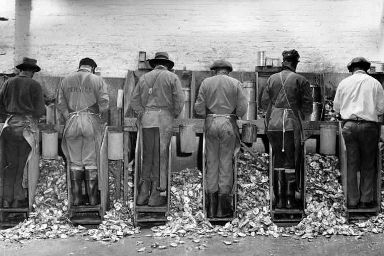 Oyster Shucking, 1946. (Hans Marx/Baltimore Sun)