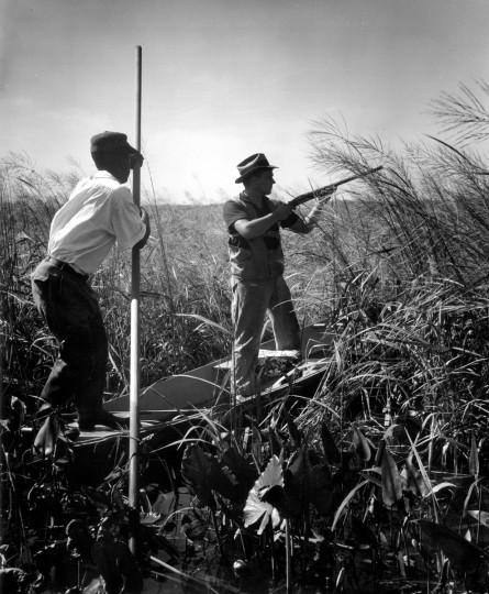 Engaging in the costliest form of hunting to be had in Maryland. Guide Charles Bias and Set Fitchett watch for rails, 1954. (Hans Marx/Baltimore Sun)