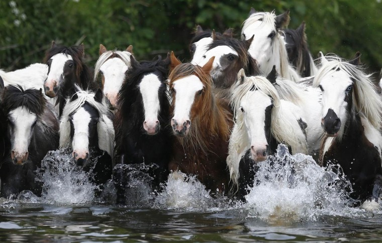 Travelers wash their horses in the river Eden at Appleby in Westmorland, northern England June 9, 2013. The horses are washed as part of the annual horse fair which has taken place since the 1600's. (Darren Staples/Reuters)