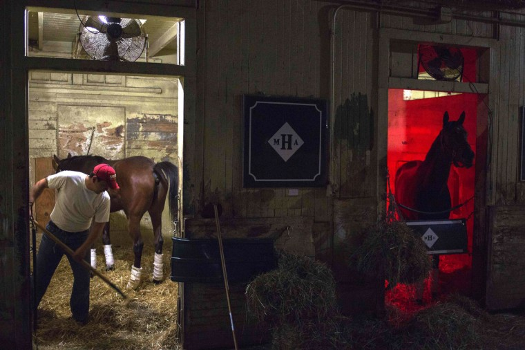 A stable hand rakes hay as a horse stands under a heating lamp before morning workouts at Belmont Park in Elmont, New York. The 145th Belmont Stakes, the final leg of racing's Triple Crown, will be held at Belmont Park on June 8. (Shannon Stapleton/Reuters photo)