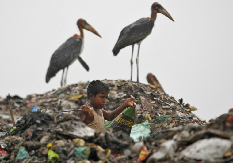 A scavenger, surrounded by a flock of Greater Adjutant birds, collects plastic for recycling at a dump site on World Environment Day in the northeastern Indian city of Guwahati. (Utpal Baruah/Reuters)